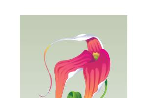 Portfolio for Floral and food plant illustration
