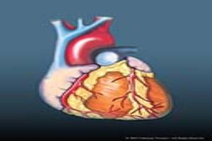 Portfolio for Basic Anatomy Medical Illustration