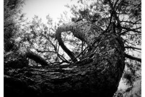 Portfolio for Outdoor Photography