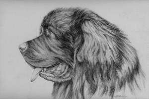 Portfolio for Pet Portraits