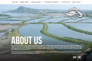 Portfolio for UI/UX - Website Design / Development