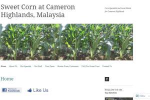 Portfolio for Create Website or Wordpress Blog