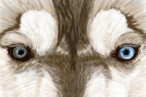 Husky's eyes - Kiera