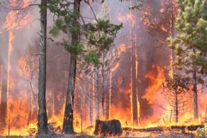 Man-made Forest Fire