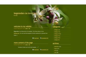 Portfolio for Effective Web Developer & Designer.