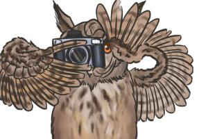 Portfolio for Freelance 2D Digital Art and Design