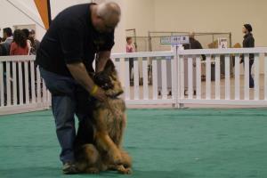 Portfolio for Pet - Dog Trainer:  Writer or Blogging