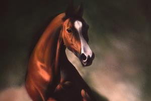 Portfolio for Animal Painting: Realistic Art