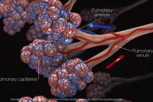 Alveolie