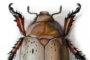 Portfolio for Illustrator- Wildlife and Fantasy