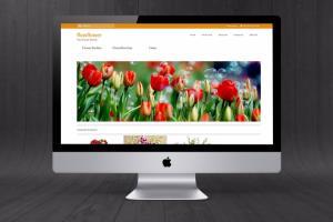 Portfolio for GraphicDesigner | Web Designer | SEO SMO