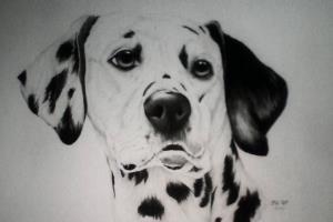 Portfolio for Surprise Him/Her with a Pencil Portrait