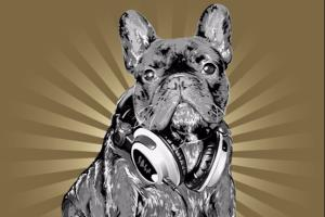 Portfolio for Drawing a famous French Bulldog