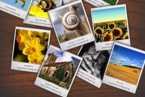 Portfolio for Gallery Application
