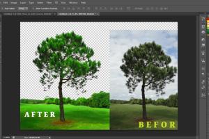 Portfolio for I Can Remove Background & Enhance Photo