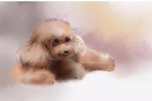 Portfolio for Watercolor animals