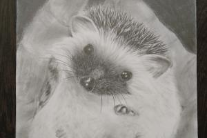 Portfolio for Pencil and soft pastel drawings