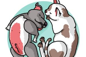 Cat and dog yin yang characters