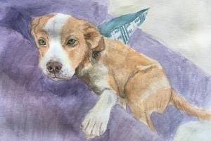 Portfolio for Animal Art / Illustration