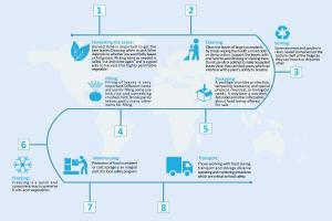 Portfolio for Infographic,graphic designing,flowchart