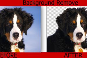 Portfolio for Background Remove and change from image