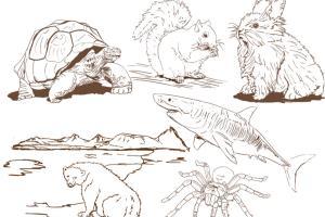 Portfolio for Digital Artist - Illustrator - Designer
