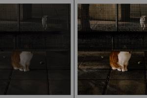 Portfolio for Photo Editor