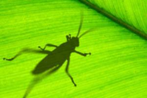 Portfolio for Grasshopper 3D Designer
