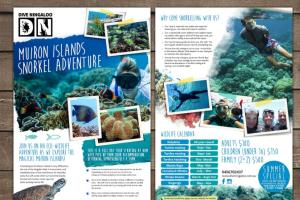 Portfolio for Top Notch Flyer AND Brochure