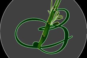 Portfolio for Logo design,2D logo design