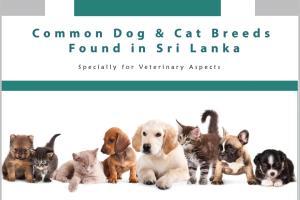 Portfolio for Animal Health and Pet Care