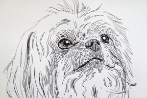 Portfolio for Pen and Ink Illustrations