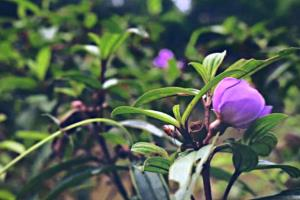 Portfolio for Image Background Removal, Photo Editing