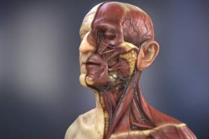 Portfolio for unique 3d 2d medical animation