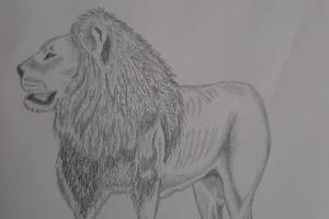 Portfolio for Drawing and Sketching